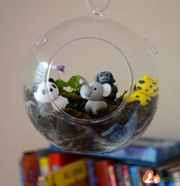Animal Terrarium for kids