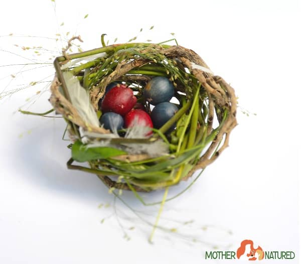 How to make a bird nest