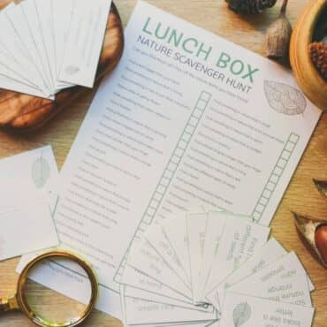 Lunch box nature cards