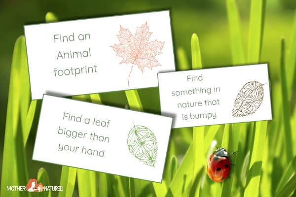 Nature Hunt Cards: Add some Curiosity to their Lunch Box!