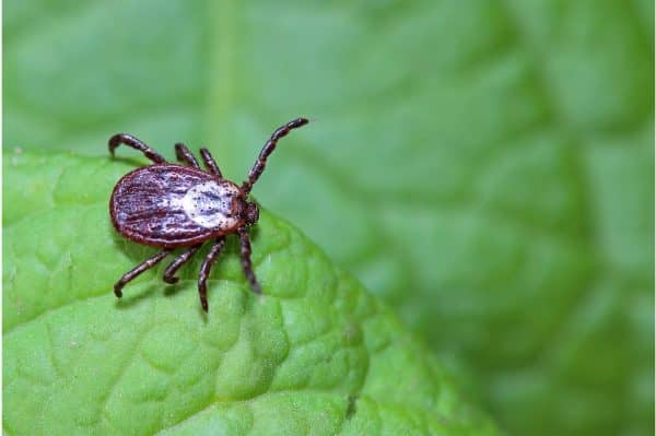 How to avoid tick bites when you're outdoors with kids