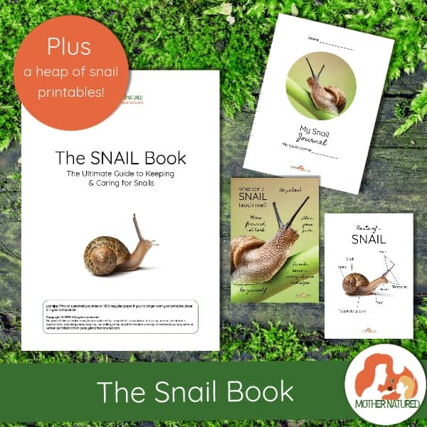 The Snail Book